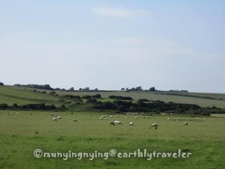 sheep in pasture_munyingnying@earthlytraveler